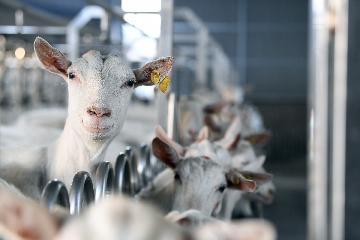 New Zealand to make key changes to dairy industry legislation