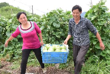 Chinas weekly farm produce prices continue to fall