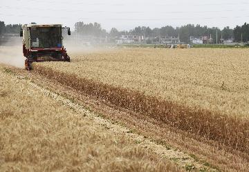 China expects bumper summer grain harvest