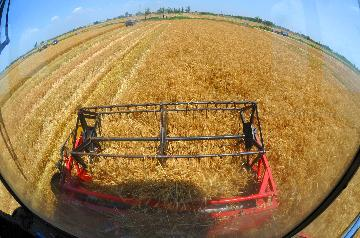 China achieves bumper summer grain harvest in 2019