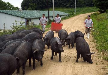 農業農村部:預計下半年豬肉供需關係進一步趨緊 豬價繼續上漲壓力較大