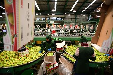 Feature: Chile seeks to conquer Chinese palate with pears