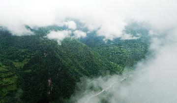 China mulls law revisions to better protect forests