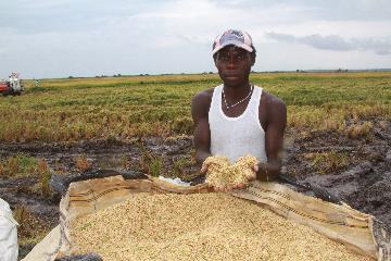 一粒米背后的中非农业合作