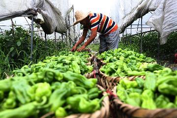農業農村部:水產品、蔬菜等優勢農產品出口總體平穩