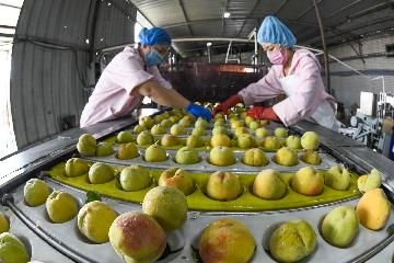 Chinas Yunnan to build processing parks for agricultural products