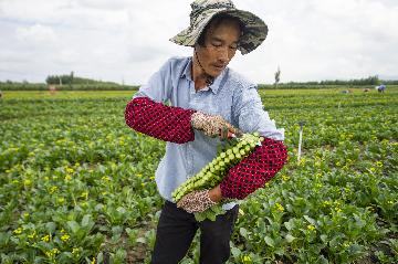 Chinas vegetable output reached 700 mln tonnes in 2018