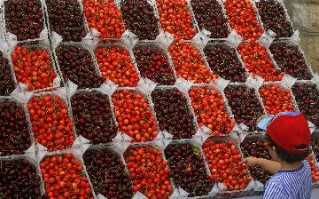 Interview: Chile eyes more Chinese opportunities for cherry exports