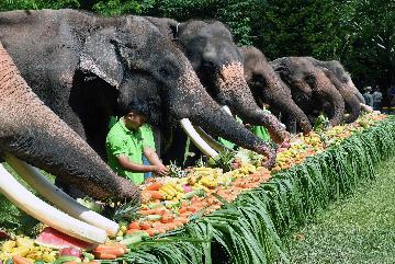 中国积极探索亚洲象人工繁育
