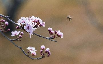 Australian govt announces 1-mln-USD grant to save honey bees