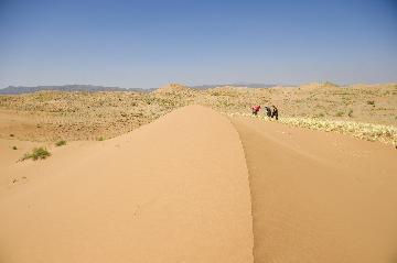 """中國西北沙漠""""穿綠衣""""給全球乾旱區生態治理提供樣板"""