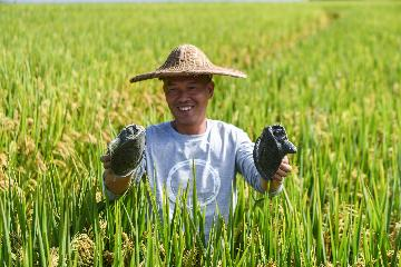中国的粮食安全白皮书:增加绿色优质粮油产品供给