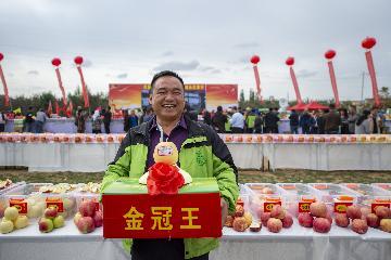 """行走中国:""""沙漠小城""""苹果飘香"""