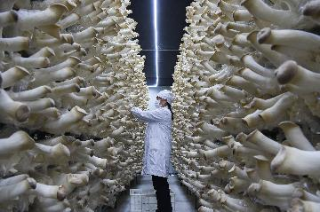 China agriculture expands steadily in first three quarters
