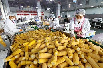哈薩克斯坦首次用集裝箱向中國出口玉米