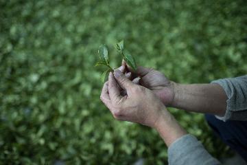中英茶企助推贵州茶更好走向世界