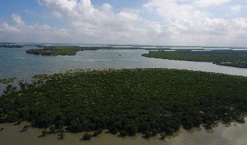 Chinas Guangdong to set up 100 nature education bases by 2023