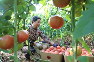China to boost industry integration in rural areas in 2020: ministry