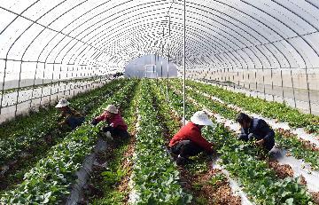 云南省出台稳定经济运行22条措施
