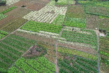 農業種質資源保護與利用確定目標 力爭到2035年保存量位居世界前列