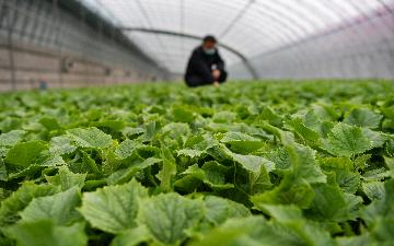 China smooths channels to promote farm produce sales