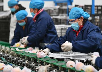 75 pct of companies confident in prospects for Chinese economy