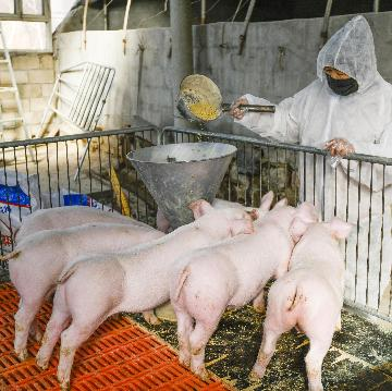 Chinas Sichuan to bolster hog industry