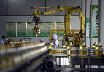 Chinas fixed-asset investment down 24.5 pct in first two months
