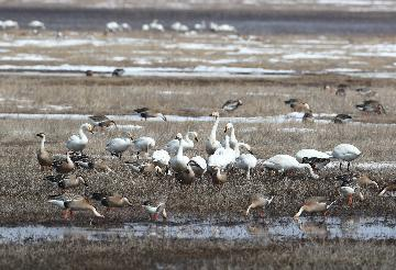 China builds new bird protection mechanism