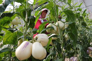 Chinas Gansu sees soaring agricultural exports in Q1