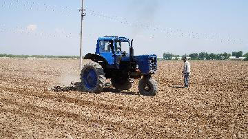Chinese water-saving technology facilitates agriculture in Uzbekistan
