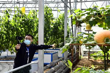 商务部:一季度全国农产品网络零售额增长31.0%