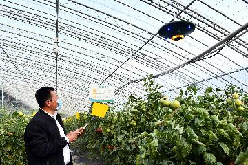 China to bolster financial, insurance support to agriculture, rural areas