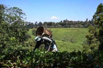 肯尼亚期待借助服贸会促进经济复苏