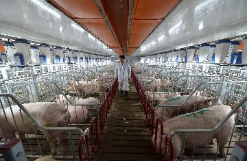 Hog prices in China edge up in late August