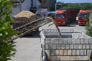 Chinas grain inventory at high level: official