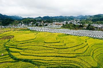 China moves to aid rural tourism recovery