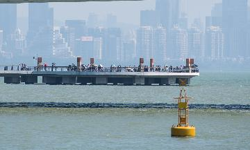 Xi urges SZ to boost construction of Guangdong-HK-Macao Greater Bay Area