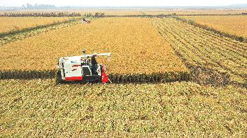 Chinas autonomous agricultural machinery sales surge