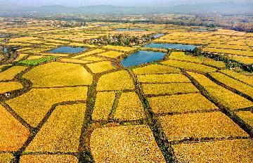 農業農村部:今年糧食豐收成定局 預計產量達到歷史最好水準