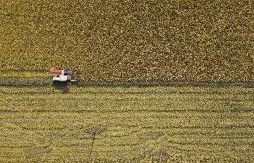 China to see bumper harvest for 2020: agriculture minister
