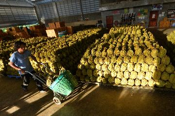 疫情下中國和東盟數字經濟合作逆勢壯大