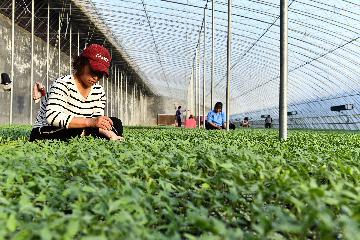 疫情之年,中國誕生農業產值破萬億省份