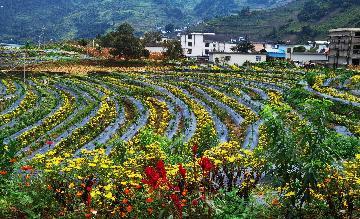 """兩部門:將在編制""""十四五""""推進農業農村現代化規劃中對健全農業及相關產業統計核算制度研究作出部署"""