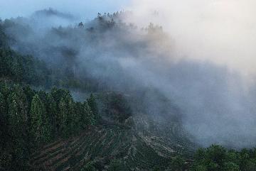 Xi inspects tea farm in east Chinas Fujian Province