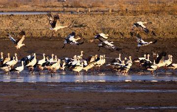 Beijing to add 1,000 hectares of wetland in 2021