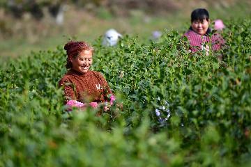 开年数据显示中国经济保持恢复性增长