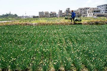 Chinas agricultural, rural economy remain stable in Q1