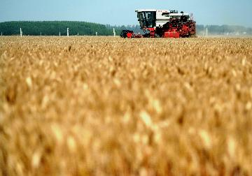 Chinas total grain output hits 669 mln tons: white paper