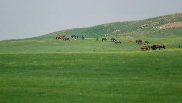 内蒙古计划到2025年森林覆盖率达23.5%